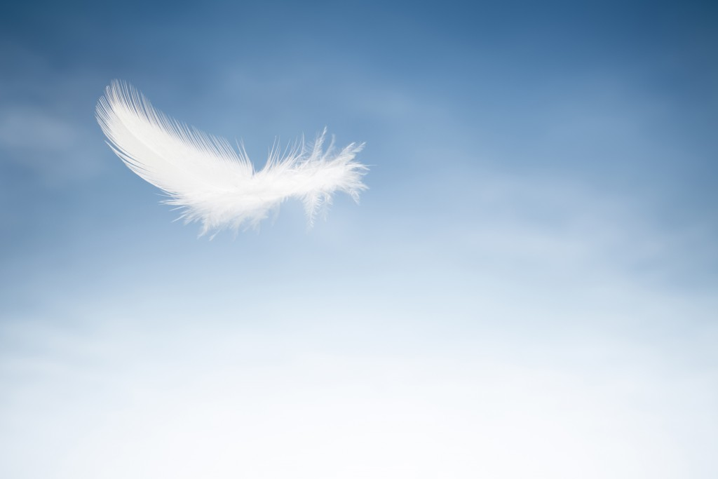 Close up photography of a white bird feather against blue sky.
